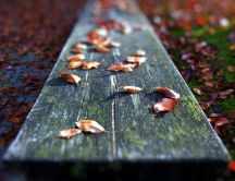 Leaves on a piece of wood in the park - macro