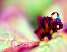 Drops of water on a flower's pistil - macro