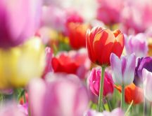 Artistic spring wallpaper - wonderful garden