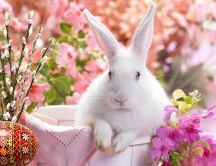 White little rabbit in a basket - Easter HD wallpaper