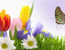The butterfly and the spring flowers - HD wallpaper