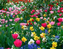 Beautiful garden - lots of colorful flowers