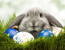 Big gray rabbit defends Easter eggs - HD wallpaper