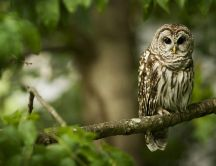 An owl sits on a tree branch - HD wallpaper