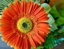 Orange Gerbera - close up HD wallpaper