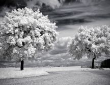 Trees loaded with flowers - HD gray wallpaper