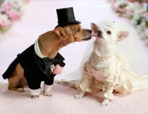 Husband and wife - Animal Wedding