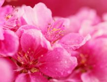 Macro - pink flower full with drops of water