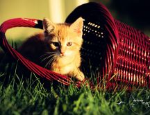 Little cat in a basket - HD wallpaper