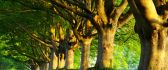 Trees can stop light rays HD wallpaper