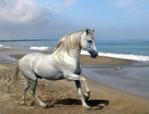 White or gray - is a beautiful horse