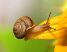 A small but powerful animal - the snail