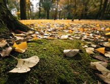 A carpet of autumn in the forest - macro HD wallpaper