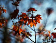 Autumn leaves - nature colors