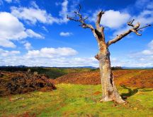 A dry tree on a green field - HD wallpaper