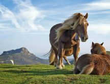 Beautiful horses playing on the field - HD wallpaper
