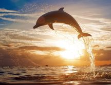 Playful dolphin - awesome HD wallpaper