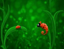 Chameleon and Ladybug - Funny HD wallpaper