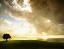 Beautiful nature - gray clouds and a single tree