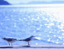 Two little seagulls on the pier - HD wallpaper