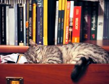 Tired cat sleeps through books and socks