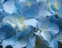 Beautiful small blue flowers - wedding flowers
