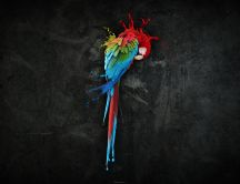 Artistic photo - colorful parrot