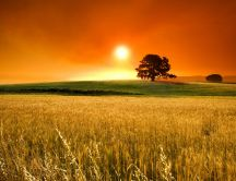 Summer sunny days - beautiful sunset over de wheat field