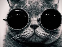 Big glasses for a cat - black and white HD wallpaper