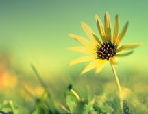 Beautiful yellow flower in the sunlight - HD wallpaper