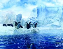 Penguins dancing in the Arctic - HD wallpaper