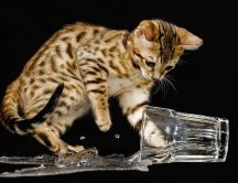 Tiger cat and a glass of water - splash