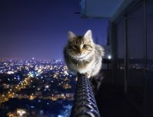 Courageous cat sits above the city - HD wallpaper