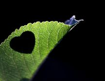 Shadow of a heart on a green leaf - HD wallpaper