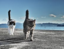 Two funny felines on a pontoon - angry cat