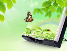 Butterfly and a beautiful small paint with green garden