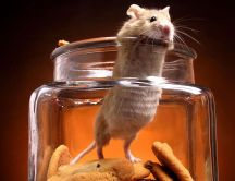 Funny rat in a jam with biscuits - HD wallpaper