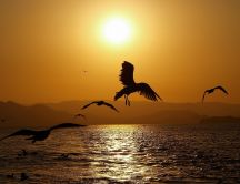 Birds in the light of sunset - HD wallpaper