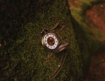 Small clock on a moss of a tree - HD wallpaper