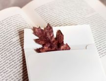 Memory of a fallen leaves find in a book
