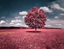 Beautiful pink flower field - autumn tree