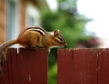 Beautiful small squirrel on the fence