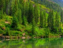 The green water of a lake - nature forest