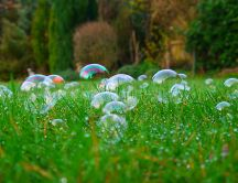 Lots of soap bubbles in the green grass