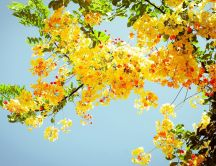 Beautiful yellow flowers on a tree - HD nature wallpaper
