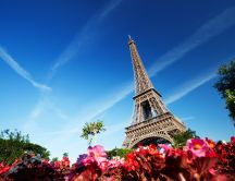 Colored flowers in Paris - beautiful Eiffel Tower