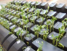 Keyboard garden - funny abstract wallpaper