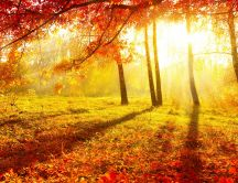 Hot sun of autumn - beautiful light in the forest