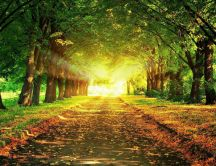 Shiny light fro the end of the path - beautiful nature