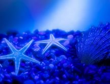 Wonders of the sea - blue starfish and shells